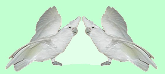 solutionary species logo